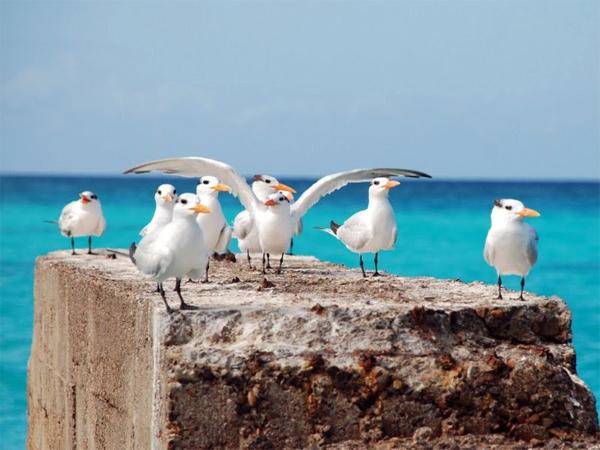 Punta Cana por Caroline Pecuch