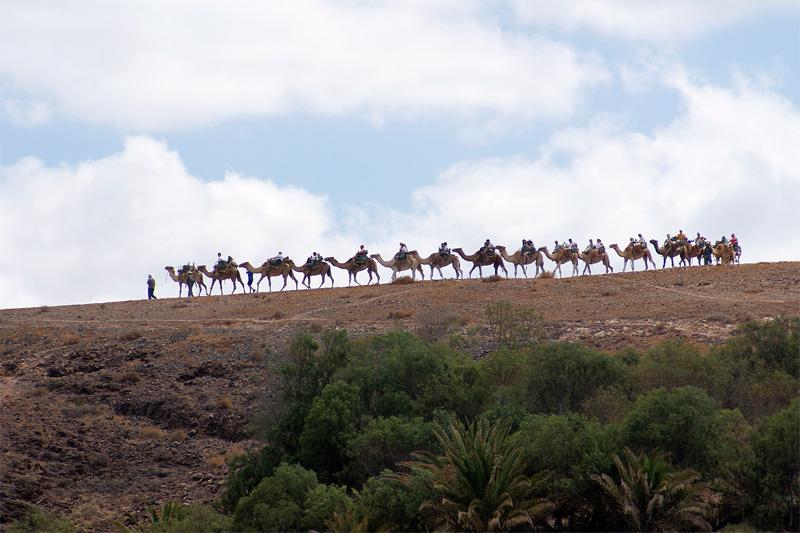 A lomos de camello — Fuerteventura por Rafael Alamillo Gutierrez