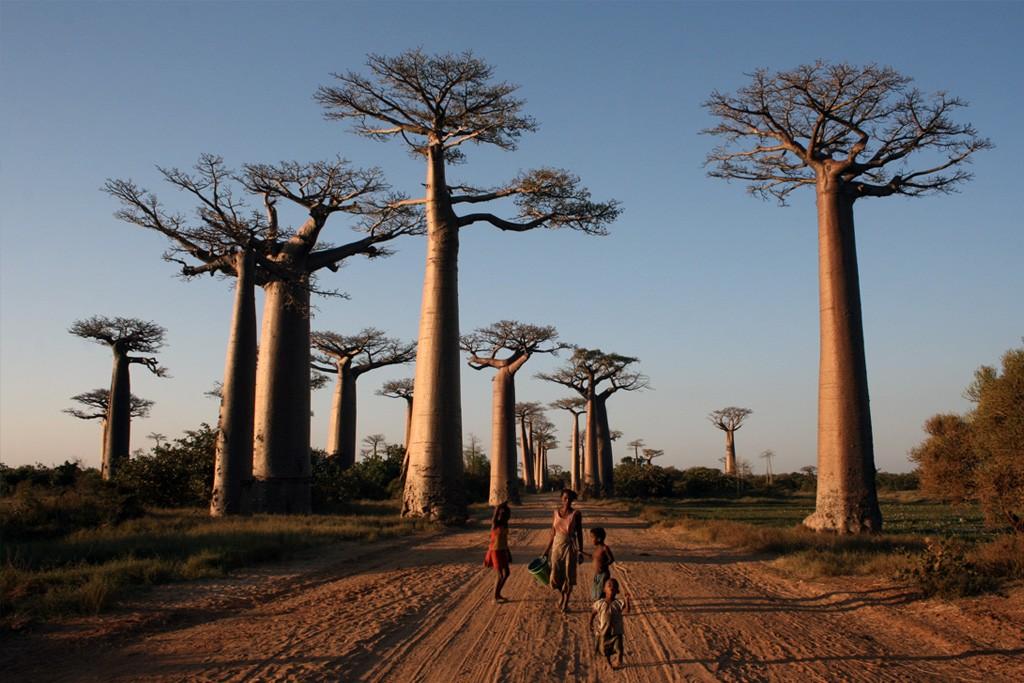 Avenida de Baobabs – Madagascar