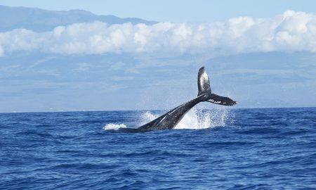 Roteiro de Ecoturismo – Observação de baleias francas em Santa Catarina