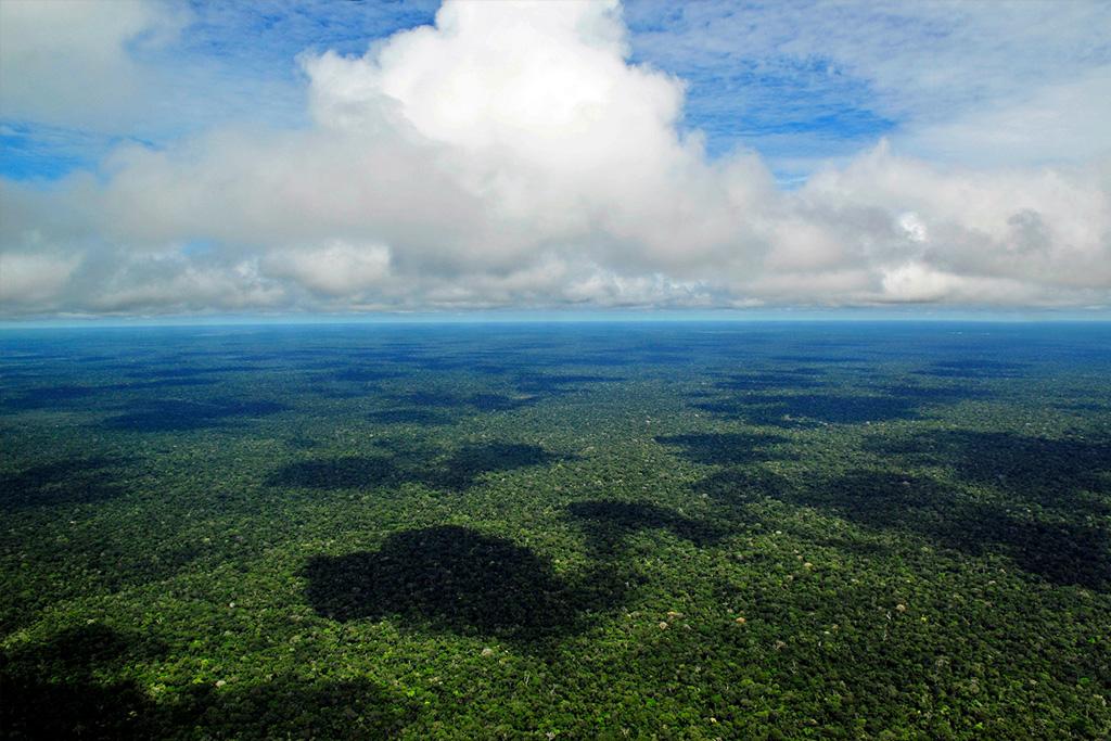 Floresta Amazônica – Manaus