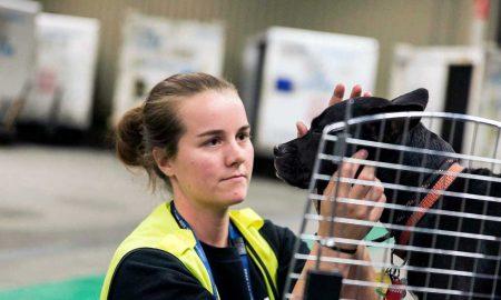 Viajando com pets – Foto: KLM