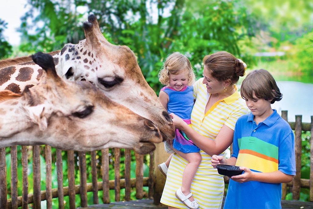 Dia das Crianças – Passear no Zoológico é uma opção divertida com as crianças