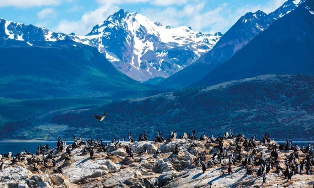 Ilha dos Pássaros – Ushuaia