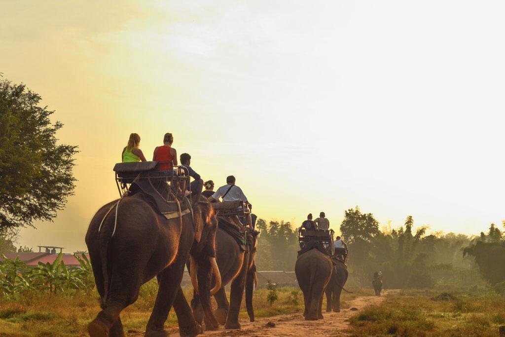 Tripadvisor anuncia compromisso para melhorar a vida selvagem no turismo e fim da venda de ingressos