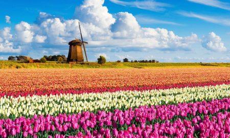 Parque Keukenhof – Holanda
