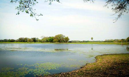Pantanal – Brasil por Sindi Wink