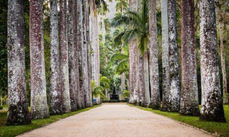 Jardim Botânico – Rio de Janeiro